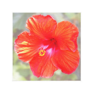 Impresión roja de la lona del hibisco impresión en lienzo estirada