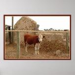 impresión roja de la vaca con la frontera poster