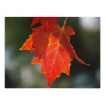 Impresión roja del otoño impresiones