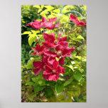 Impresión roja del poster de las flores de Clemeti