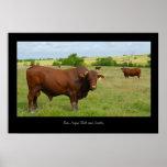 Impresión roja del poster del ganado de Angus