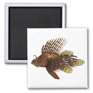 Impresión roja del vintage del Lionfish Imán Cuadrado