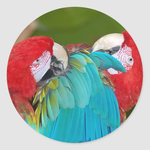 Impresión roja y azul del loro del macaw etiquetas redondas