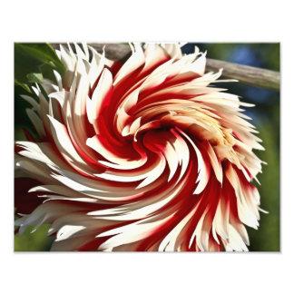 Impresión roja y blanca de la bella arte de la dal fotografía