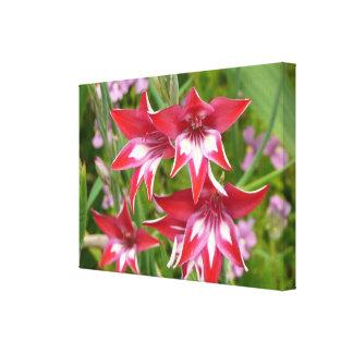 Impresión roja y blanca de la lona de Gladiolas Lona Estirada Galerias