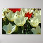Impresión roja y blanca del poster de los tulipane