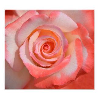 Impresión romántica de la foto del rosa rojo y bla