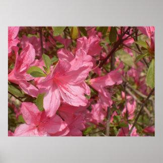 Impresión rosada de la azalea posters