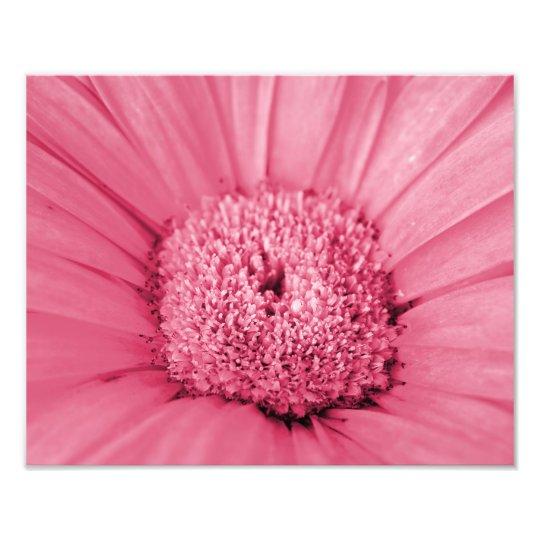 Impresión rosada de la foto de la margarita del fotografías