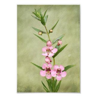 Impresión rosada de la foto de las orquídeas cojinete