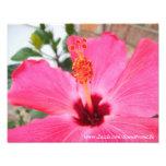 Impresión rosada de la foto del hibisco