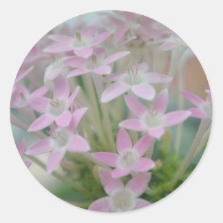 Impresión rosada de la foto del racimo de flores pegatina redonda