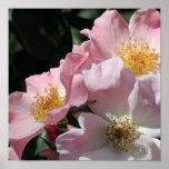 Impresión rosada de los rosas impresiones