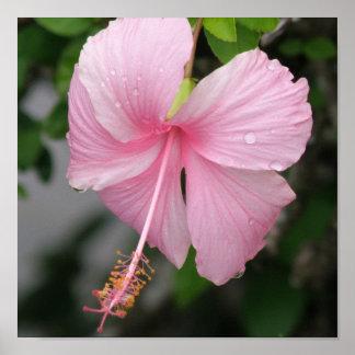 Impresión rosada del poster del hibisco