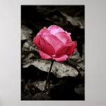 Impresión rosada del rosa impresiones