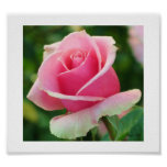 Impresión rosada del rosa póster