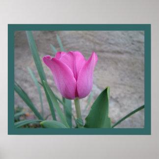 Impresión rosada del tulipán impresiones