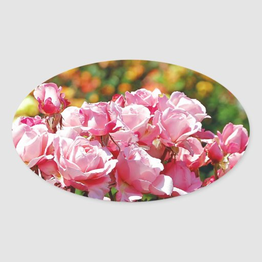 Impresión rosada hermosa de la rosaleda calcomanía de ovaladas