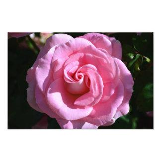 Impresión rosada sedosa del rosa fotografías