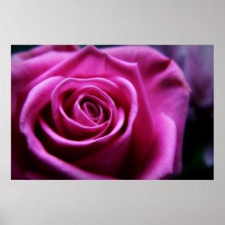 Impresión rosada suave del rosa posters