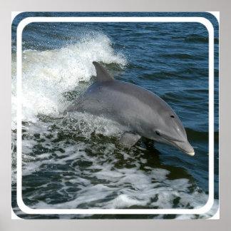 Impresión salvaje del poster del delfín
