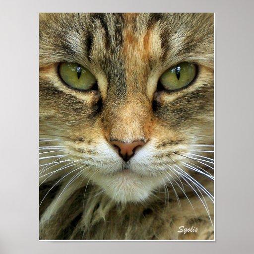 Impresión salvaje del retrato del gato póster