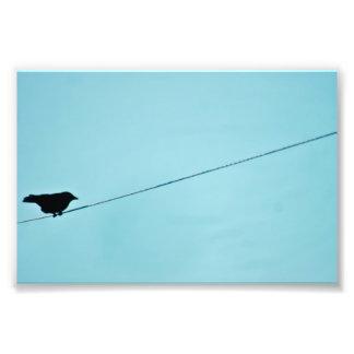 Impresión silueta-azul de la foto del cielo del pá cojinete