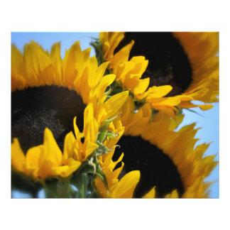 Impresión soleada de la foto de las flores fotografías