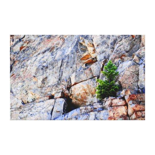Impresión solitaria de la lona del pino lona estirada galerias