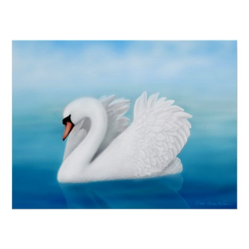 Impresión solitaria del cisne mudo póster