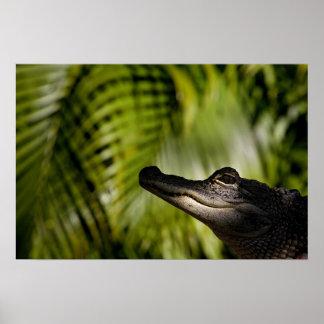 Impresión sombría del cocodrilo impresiones