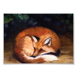 Impresión soñolienta de la foto del Fox rojo Fotografía