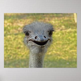 Impresión sonriente de la avestruz póster
