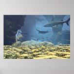 impresión subacuática de la vida posters
