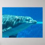Impresión subacuática del delfín posters