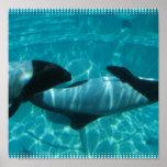 Impresión subacuática del poster de las ballenas