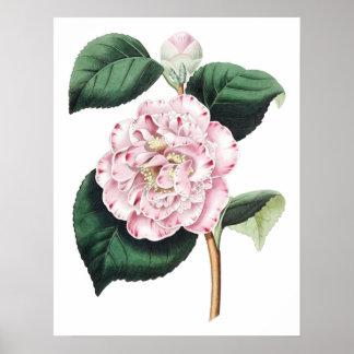 Impresión SUPERIOR botánica de la CALIDAD de la ca Posters