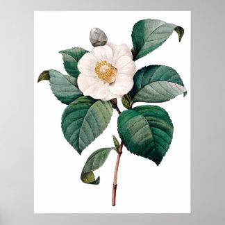 Impresión SUPERIOR botánica de la CALIDAD de la ca Póster