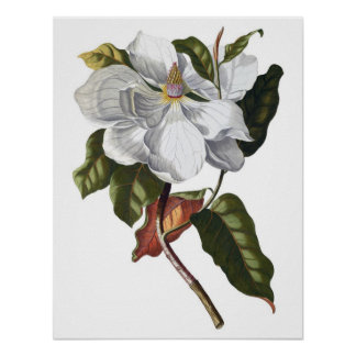 Impresión SUPERIOR botánica de la CALIDAD de la ma Posters
