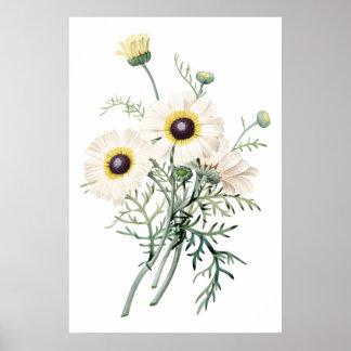 Impresión SUPERIOR botánica de la CALIDAD del cris Posters