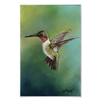 Impresión Throated de rubíes del arte del pájaro d Póster