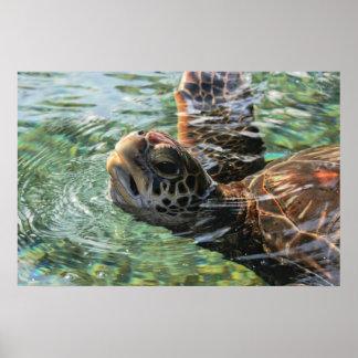 Impresión: Tortuga de mar verde Poster