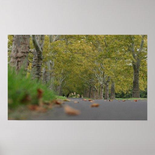 Impresión tranquila de la foto de los árboles póster