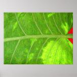 Impresión tropical de la hoja posters