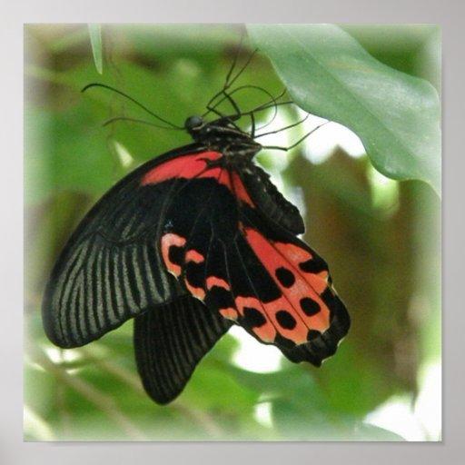 Impresión tropical del poster de la mariposa