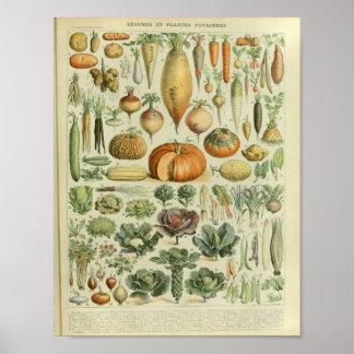 Impresión vegetal del arte del color del vintage póster