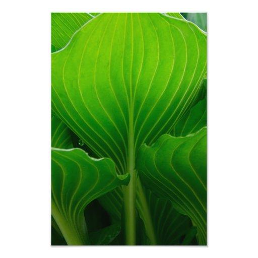 Impresión verde de la fotografía de la hoja del Ho