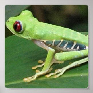 Impresión verde de la rana arbórea de Red Eye Póster