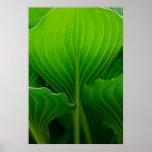 Impresión verde del poster de la hoja del Hosta