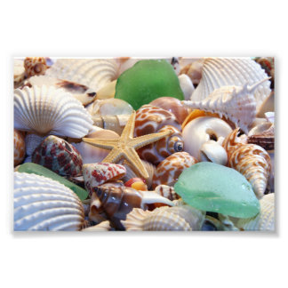 Impresiones de la foto de los Seashells Cojinete